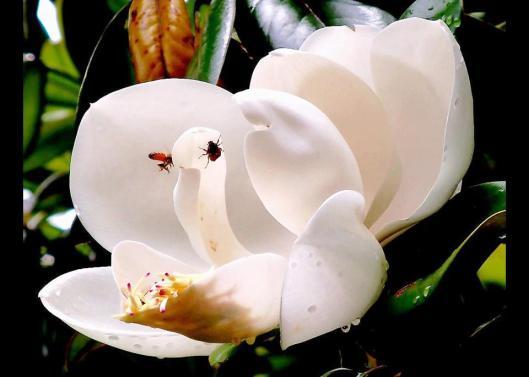 magnolia image (3)